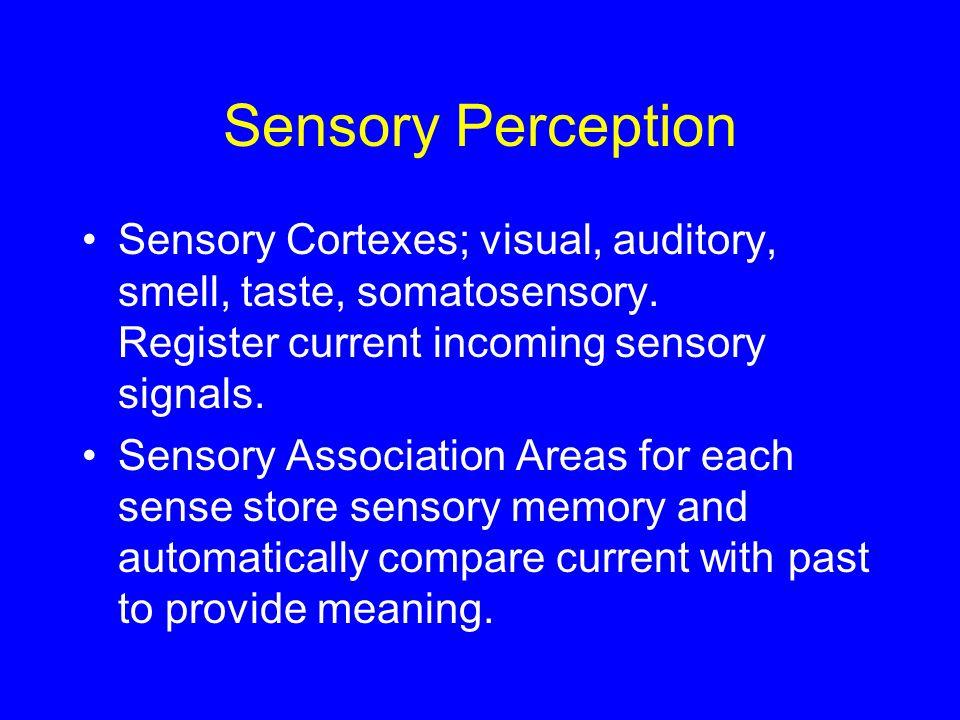Sensory Perception Sensory Cortexes; visual, auditory, smell, taste, somatosensory. Register current incoming sensory signals.