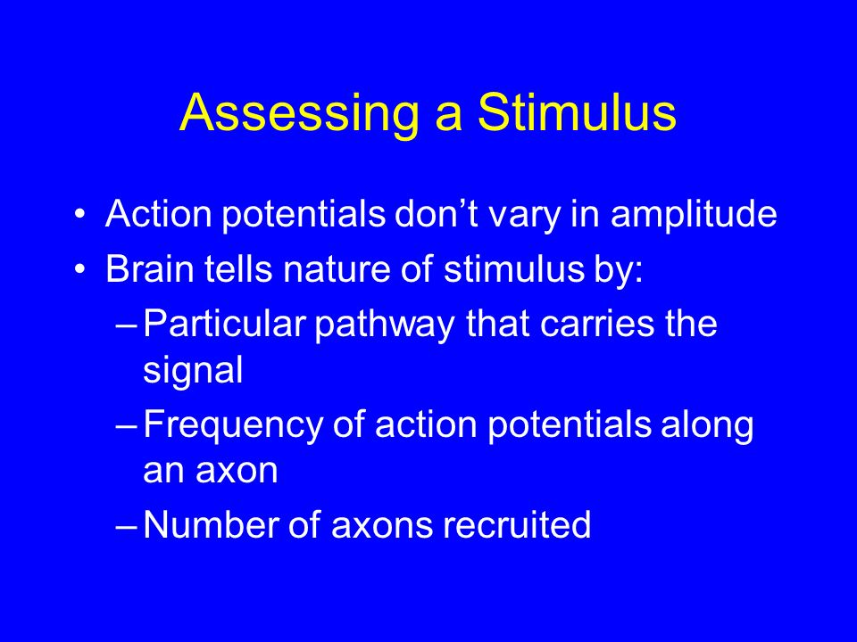 Assessing a Stimulus Action potentials don't vary in amplitude