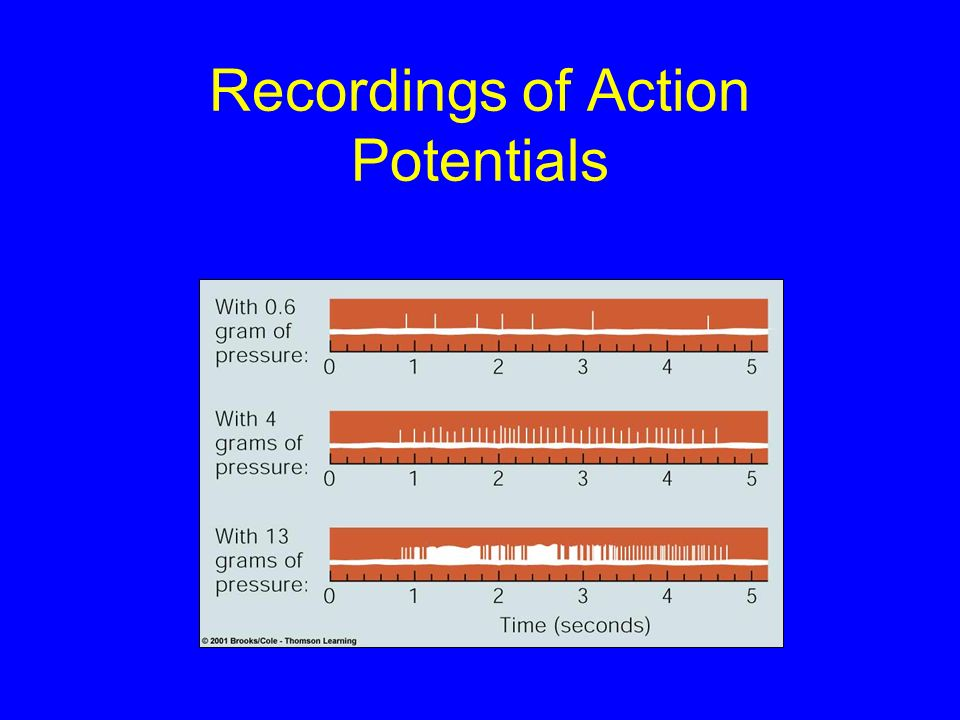 Recordings of Action Potentials