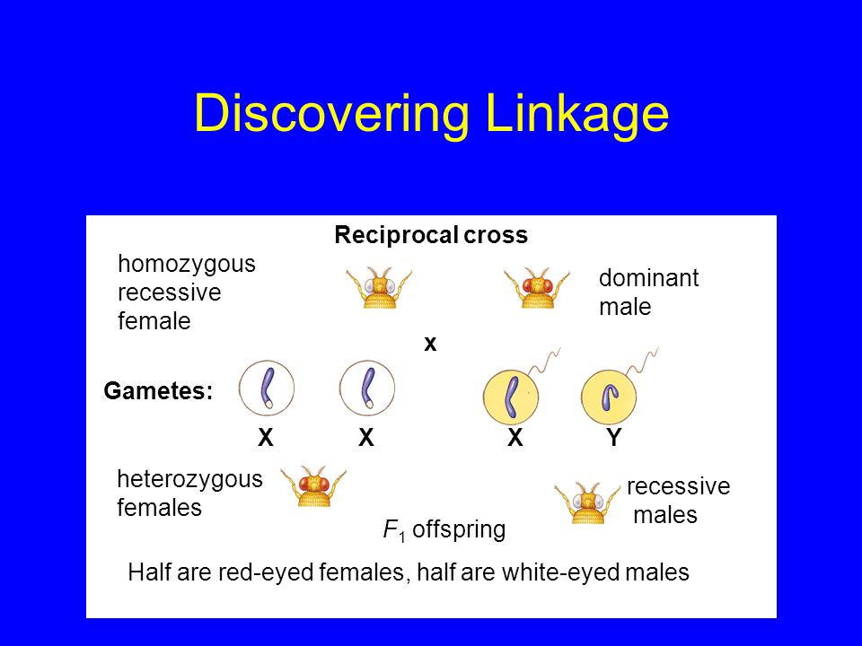 Discovering Linkage Reciprocal cross homozygous recessive female