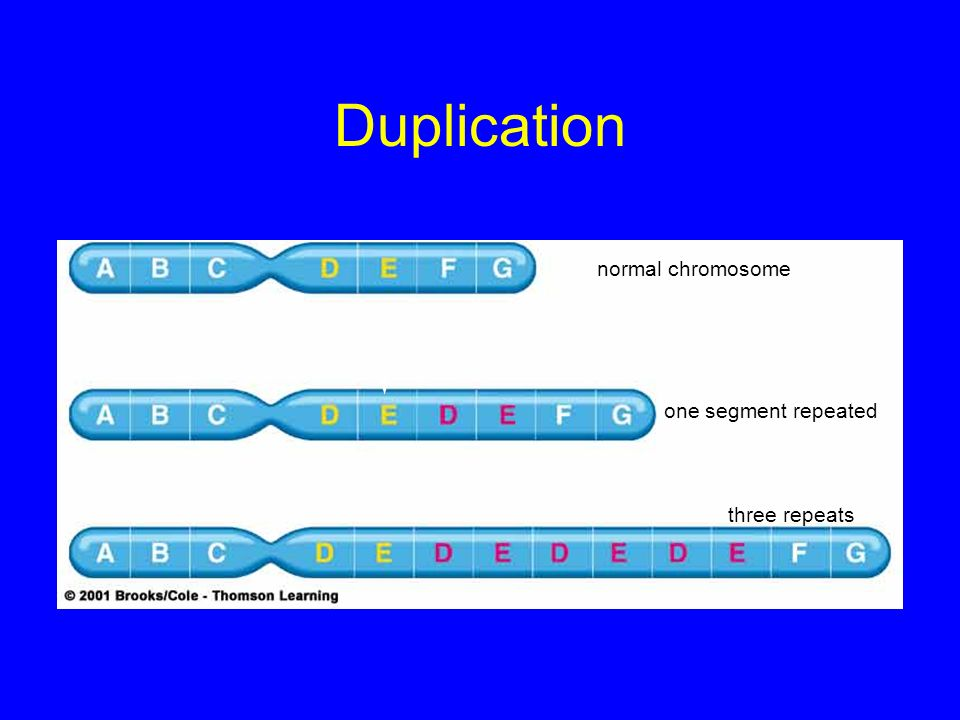 Duplication normal chromosome one segment repeated three repeats