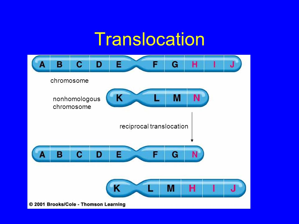 Translocation chromosome nonhomologous chromosome