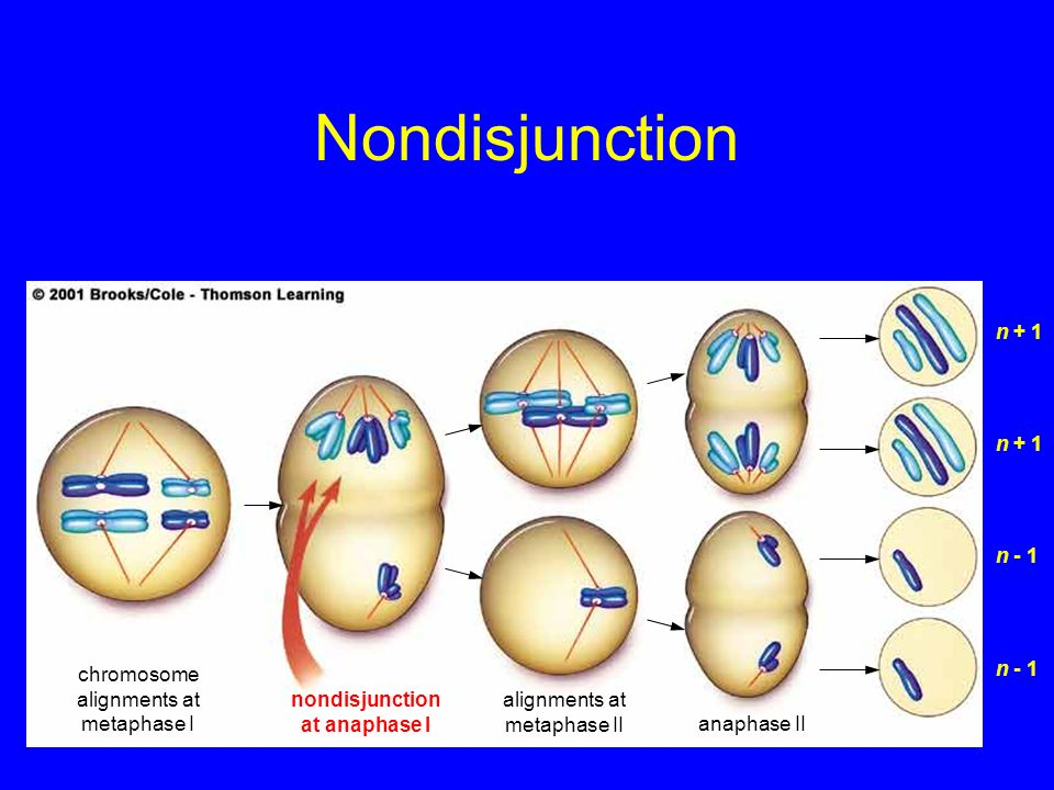 nondisjunction at anaphase I