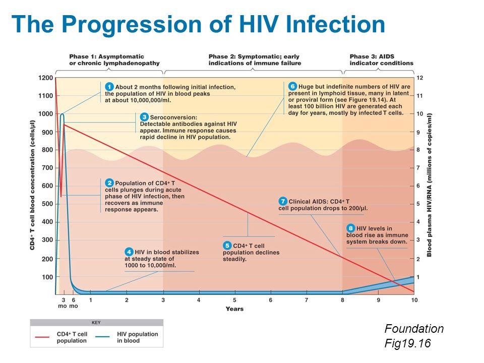 The Progression of HIV Infection