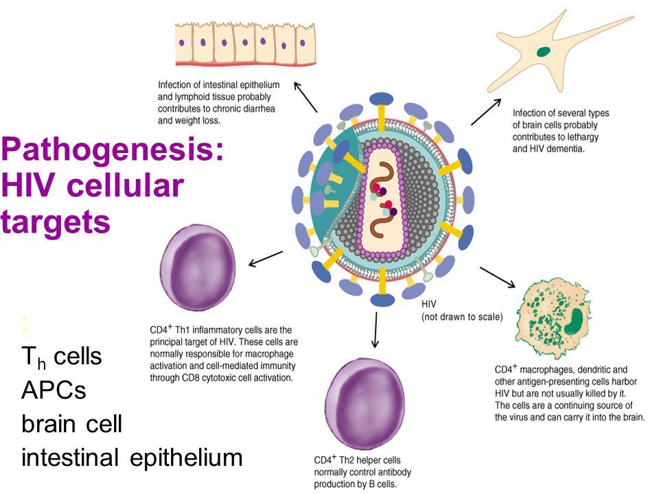 Pathogenesis: HIV cellular targets
