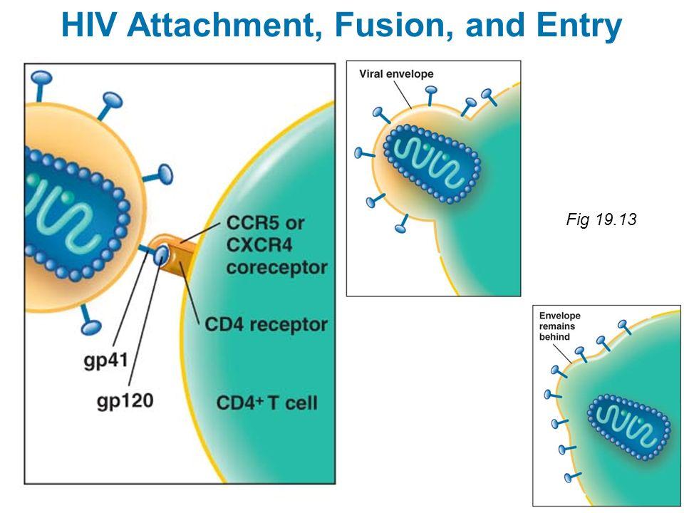 HIV Attachment, Fusion, and Entry