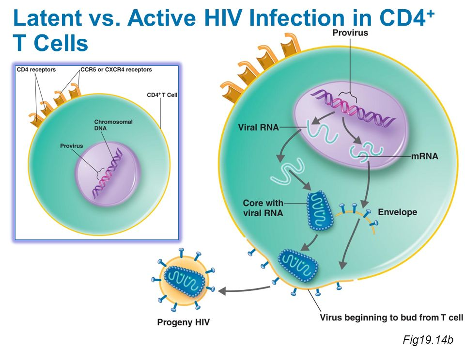 Latent vs. Active HIV Infection in CD4+ T Cells