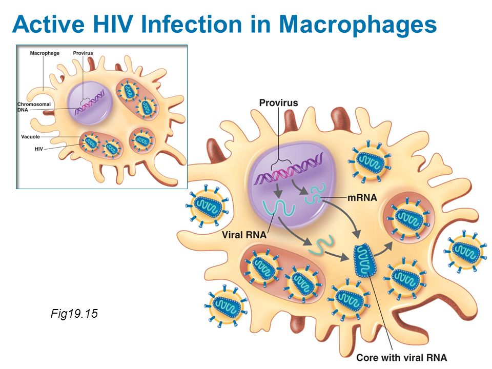 Active HIV Infection in Macrophages