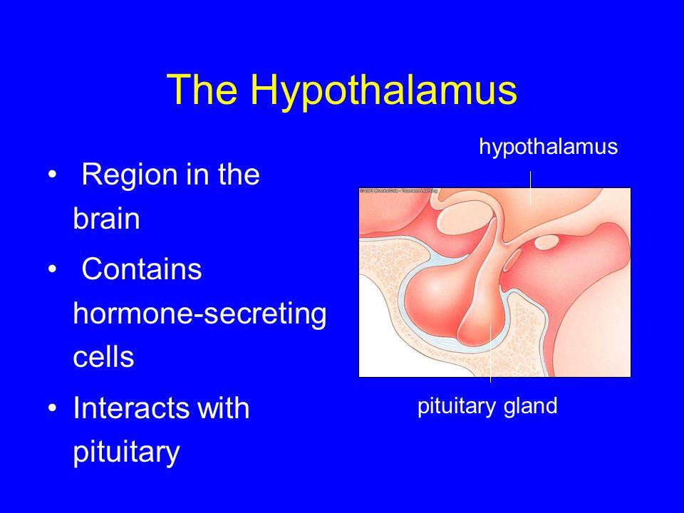 The Hypothalamus Region in the brain Contains hormone-secreting cells