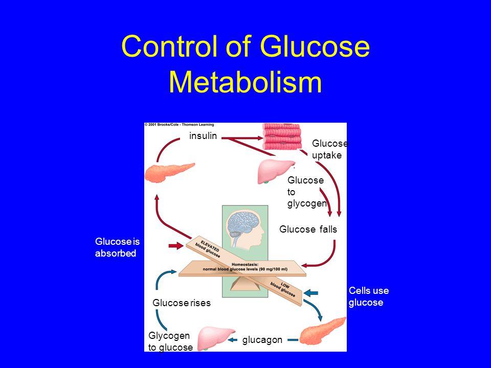 Control of Glucose Metabolism