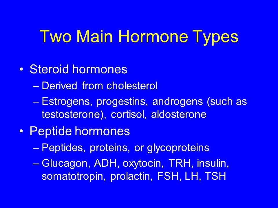 Two Main Hormone Types Steroid hormones Peptide hormones