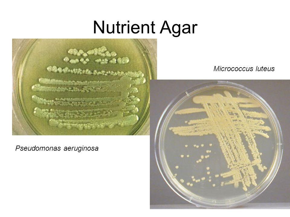 Nutrient Agar Micrococcus luteus Pseudomonas aeruginosa