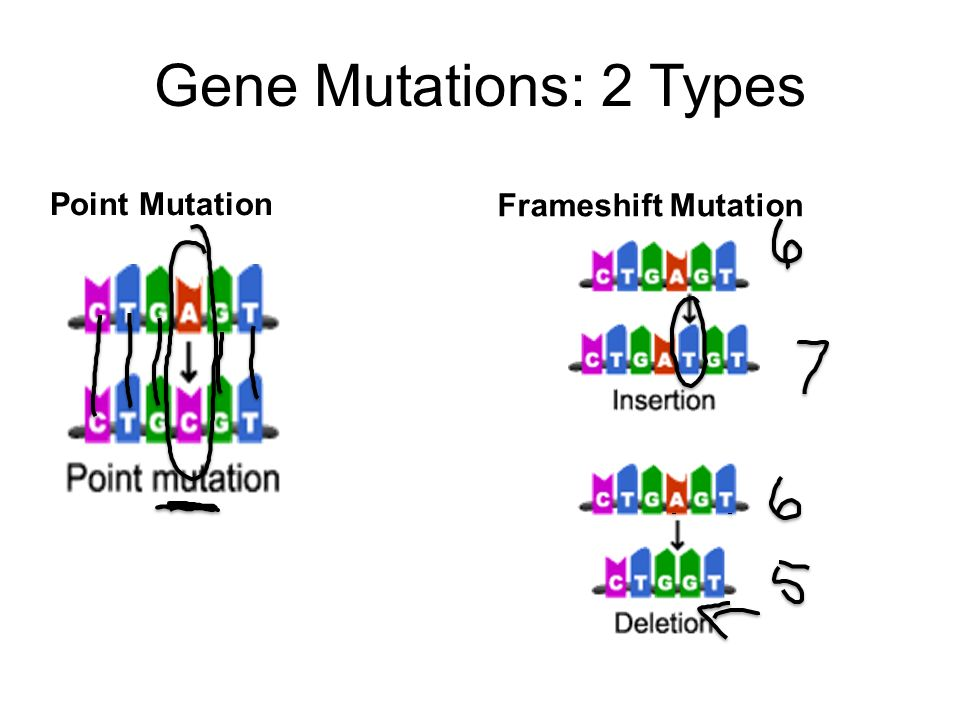 gene mutations Gene mutation vs chromosome mutation mutations are the changes that occur in the genetic material of organisms, and those take place due to various reasons gene mutations and chromosome mutations are the two basic types of mutations, and those vary from each other mainly in the magnitude of the alteration.