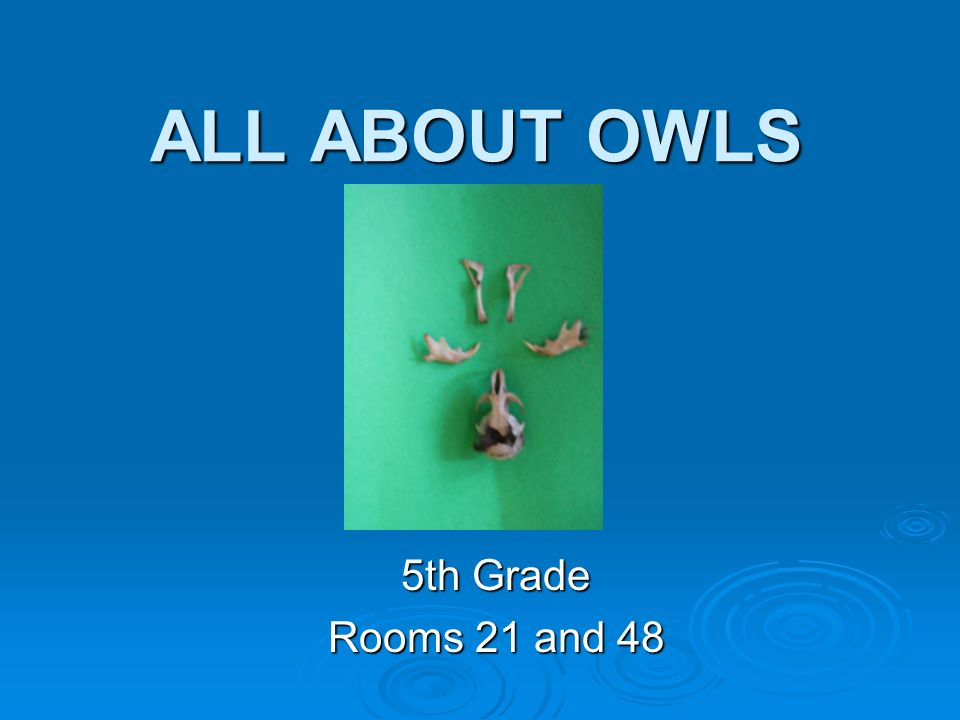 ALL ABOUT OWLS 5th Grade Rooms 21 and 48