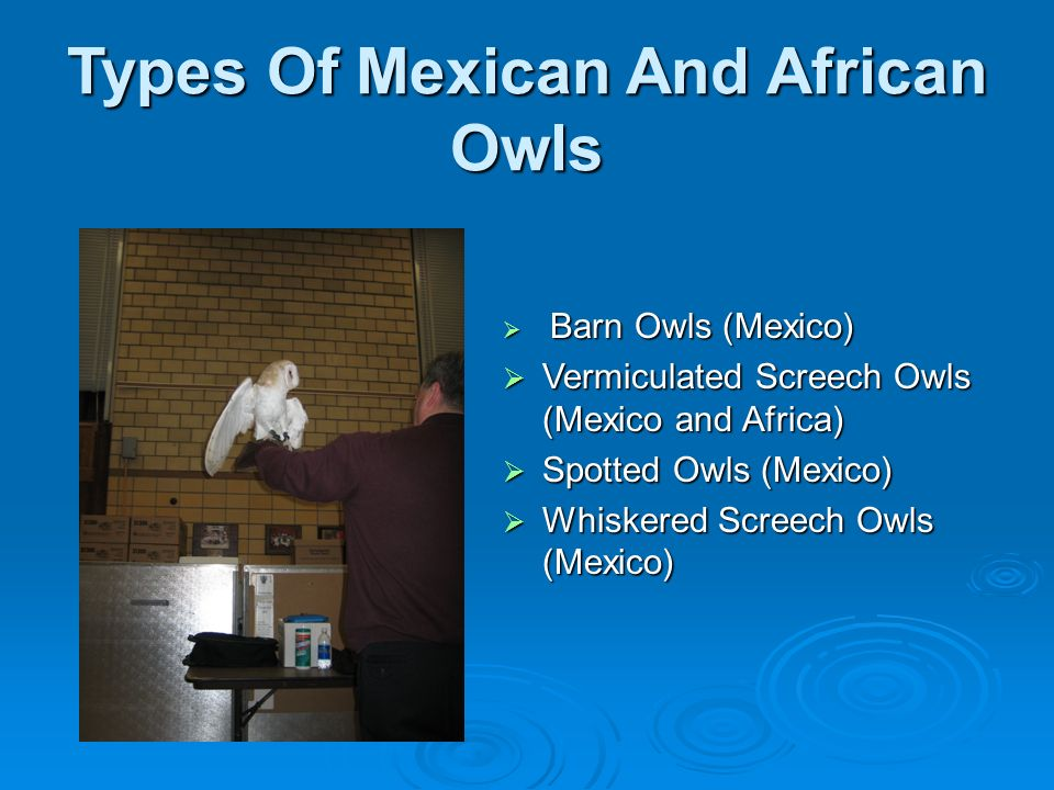 Types Of Mexican And African Owls