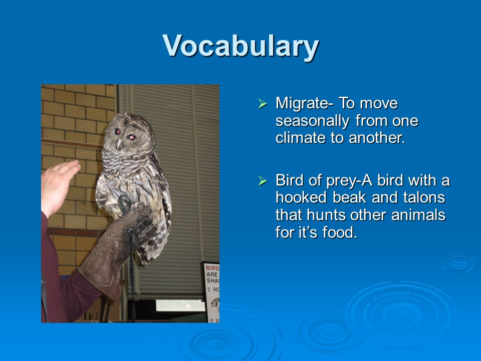 Vocabulary Migrate- To move seasonally from one climate to another.