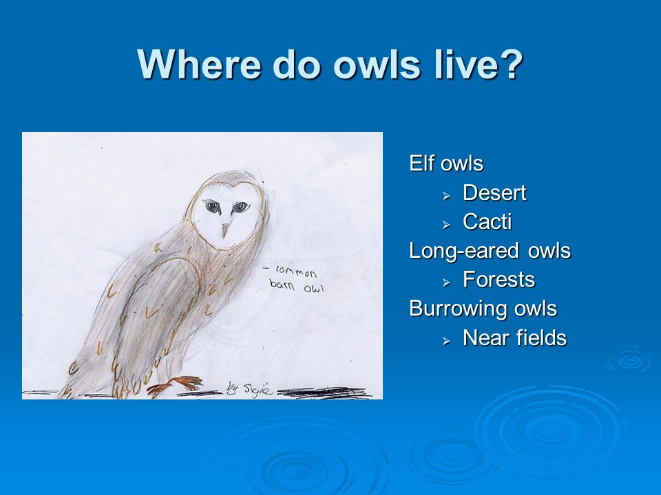 Where do owls live Elf owls Desert Cacti Long-eared owls Forests