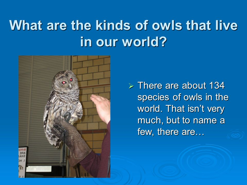What are the kinds of owls that live in our world
