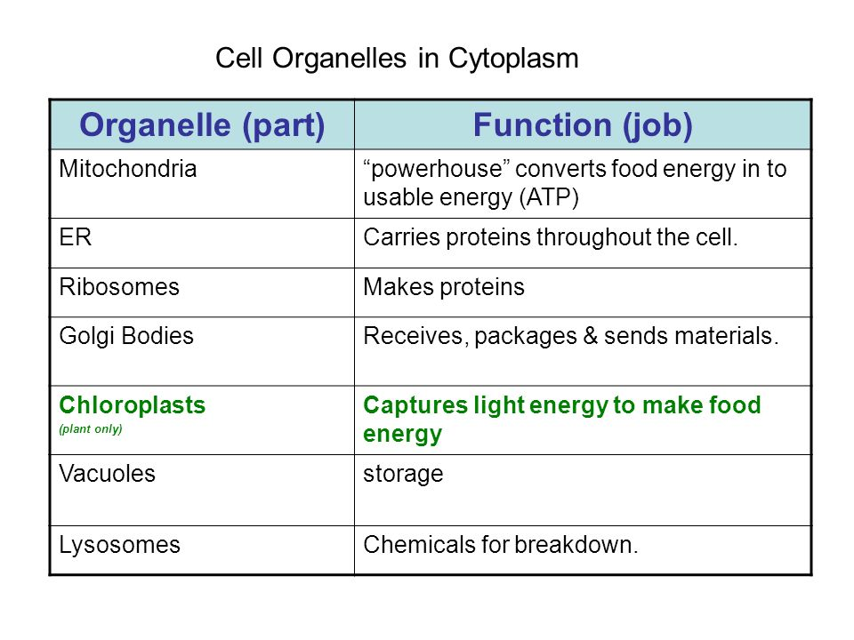 Organelle (part) Function (job)