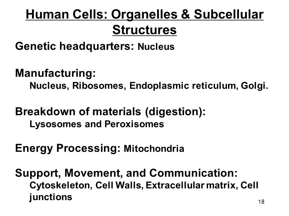 Human Cells: Organelles & Subcellular Structures