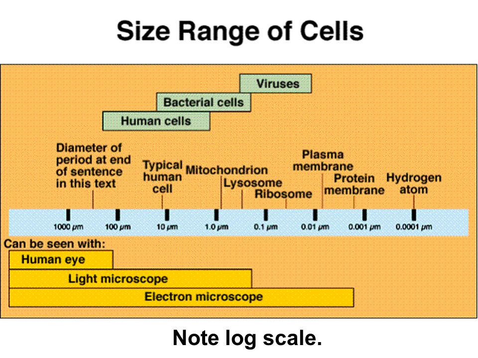 Note log scale. 2