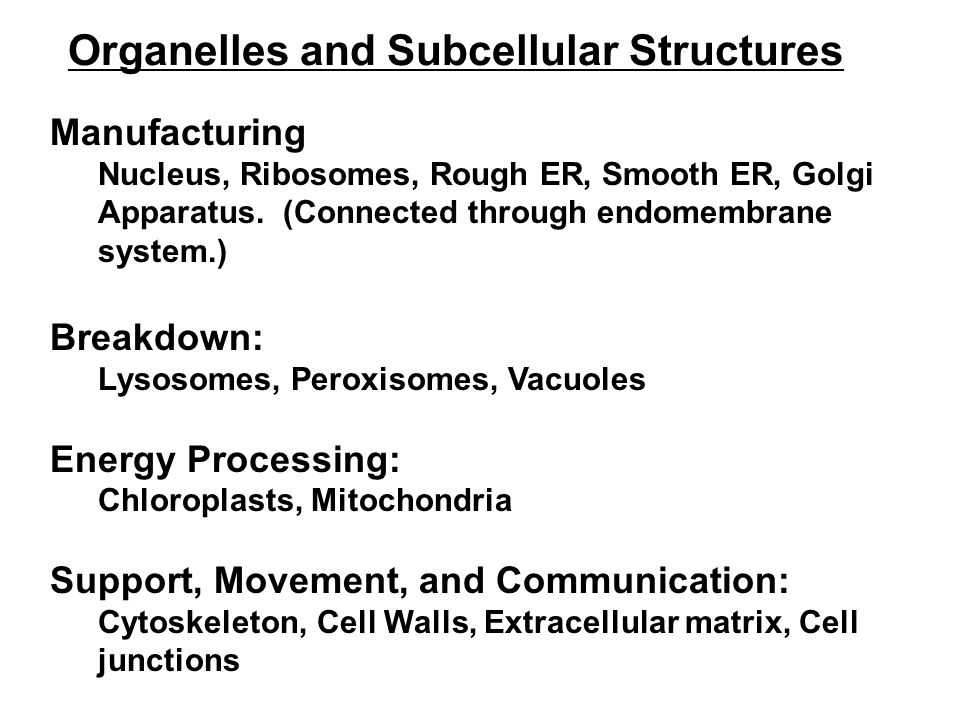Organelles and Subcellular Structures