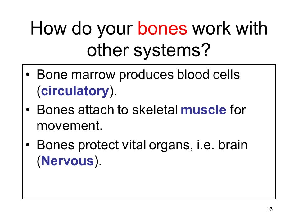 How do your bones work with other systems