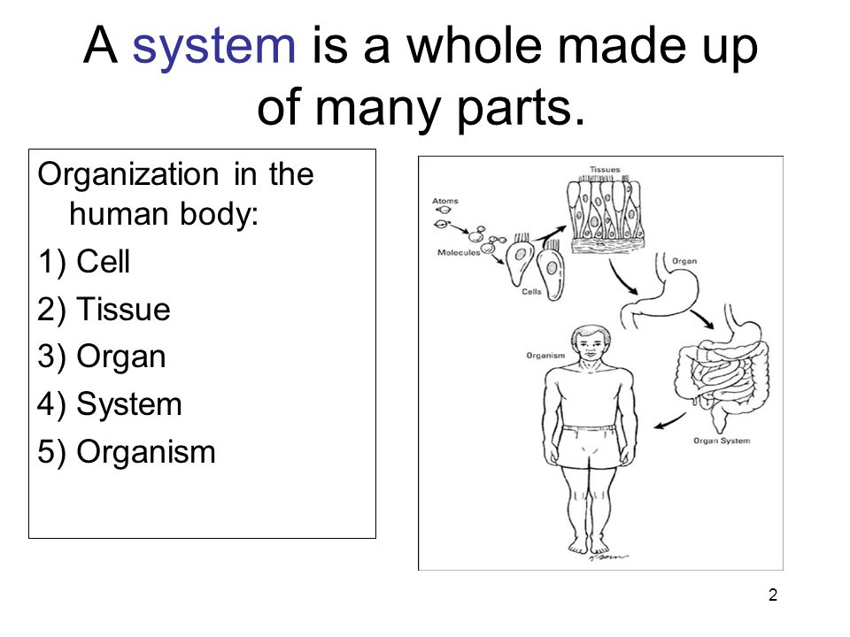 A system is a whole made up of many parts.