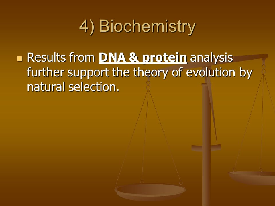 4) Biochemistry Results from DNA & protein analysis further support the theory of evolution by natural selection.
