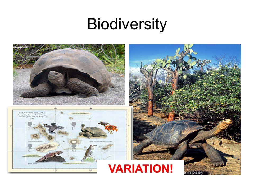 Biodiversity VARIATION!