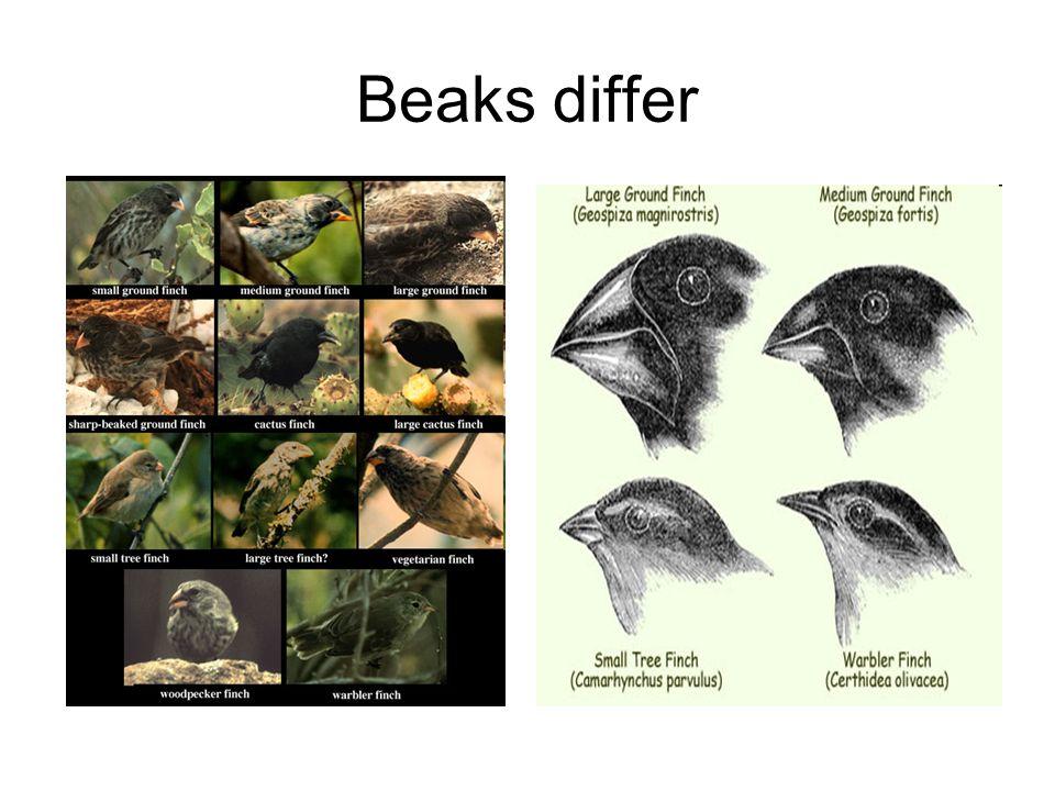 Beaks differ