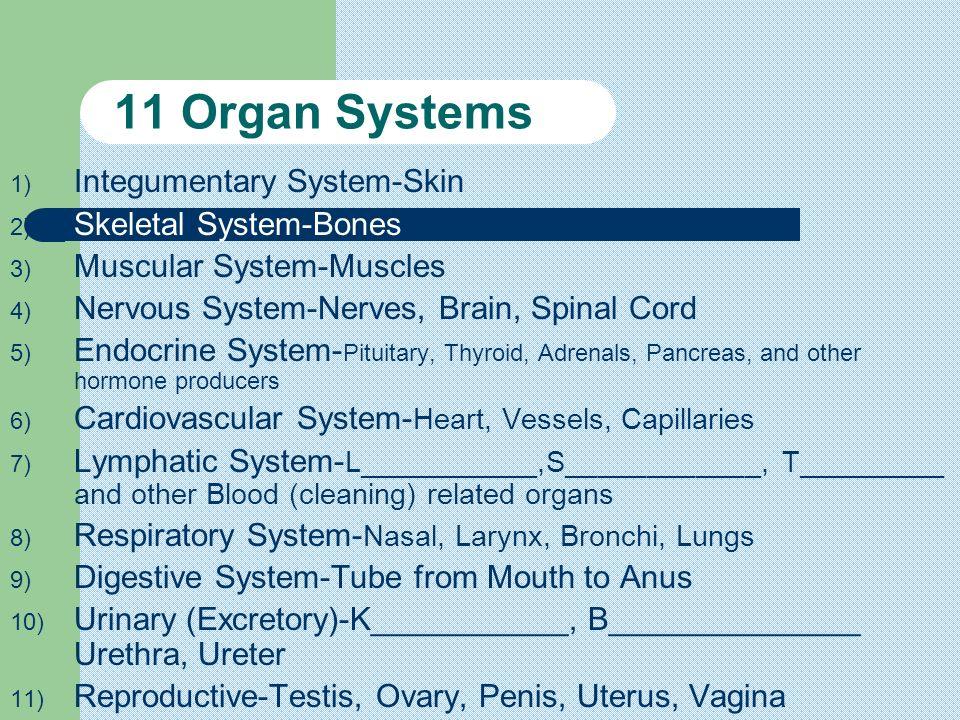 11 Organ Systems Integumentary System-Skin Skeletal System-Bones