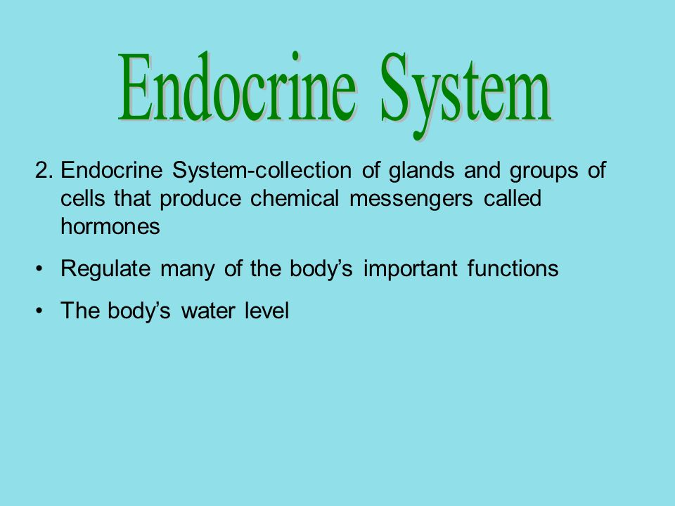 Endocrine System Endocrine System-collection of glands and groups of cells that produce chemical messengers called hormones.