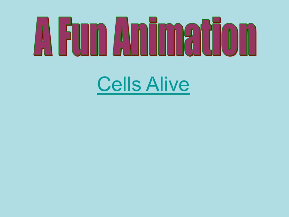 A Fun Animation Cells Alive