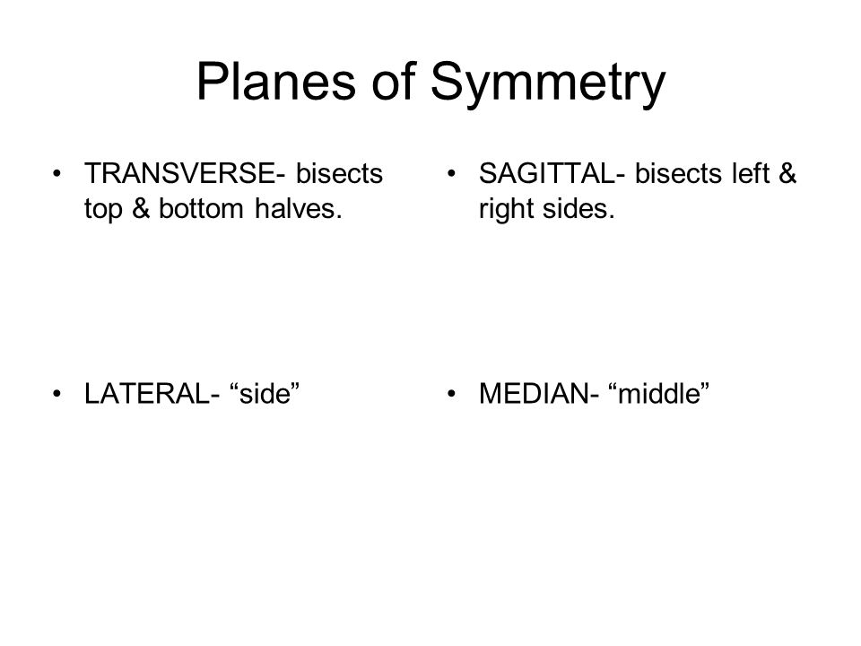 Planes of Symmetry TRANSVERSE- bisects top & bottom halves.