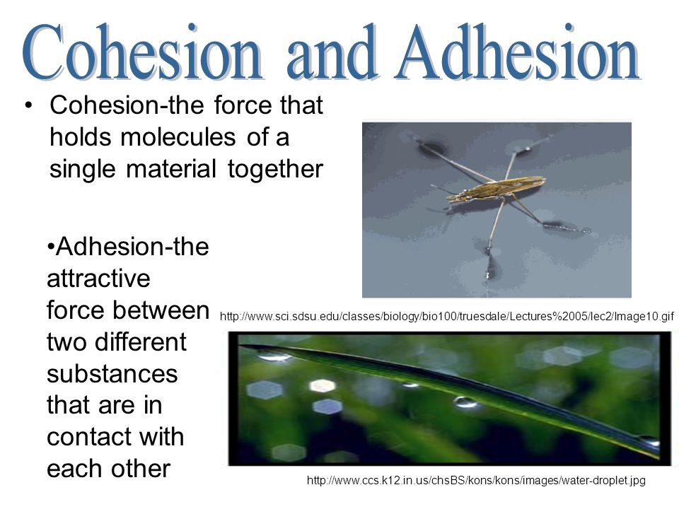 Cohesion and Adhesion Cohesion-the force that holds molecules of a single material together.