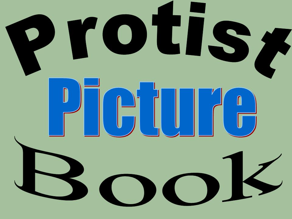 Protist Picture Book