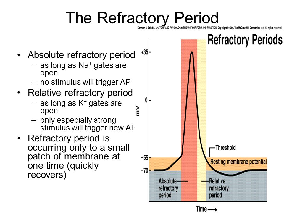 The Refractory Period Absolute refractory period