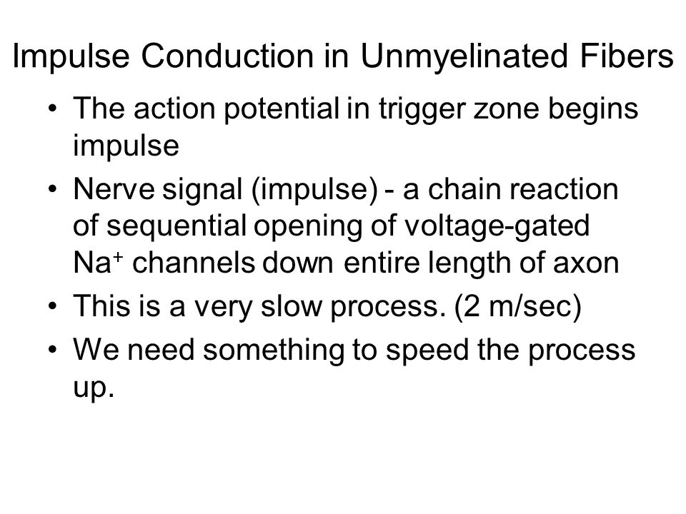 Impulse Conduction in Unmyelinated Fibers