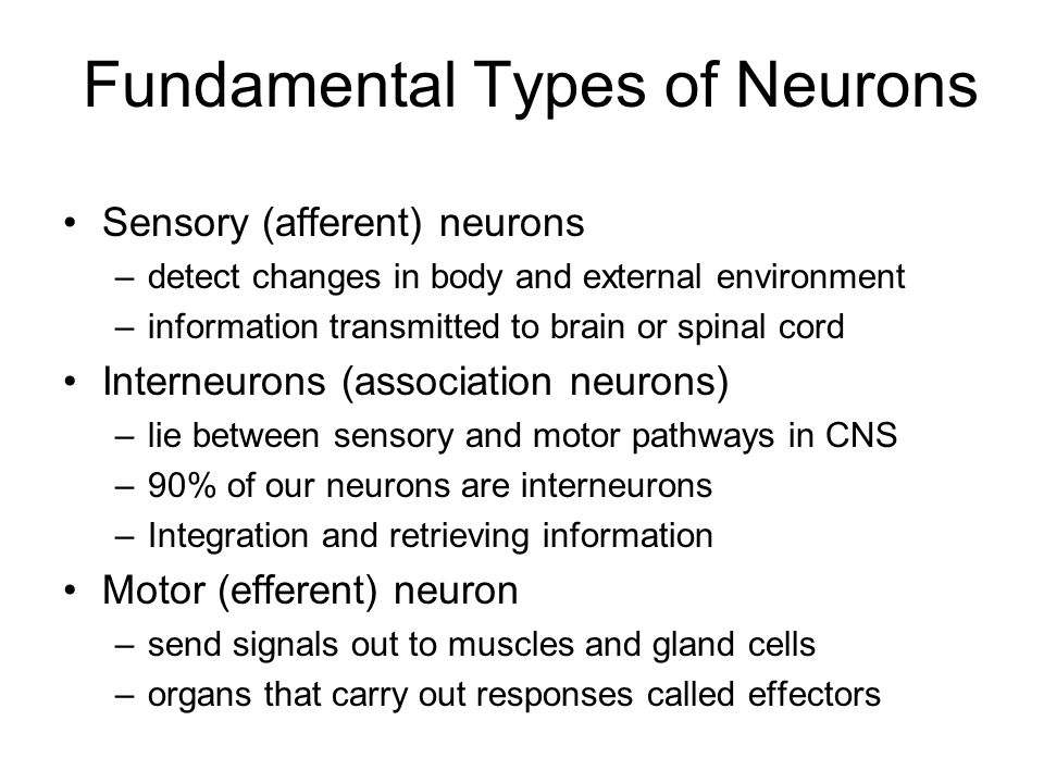Fundamental Types of Neurons