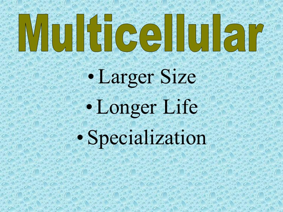 Multicellular Larger Size Longer Life Specialization