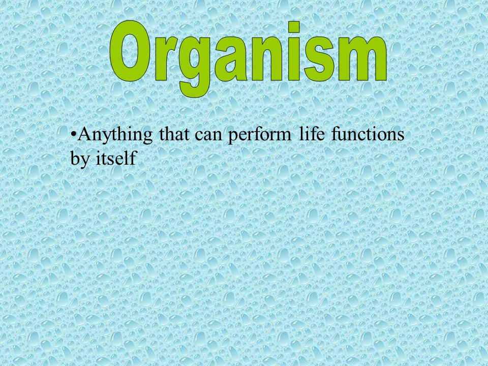 Organism Anything that can perform life functions by itself