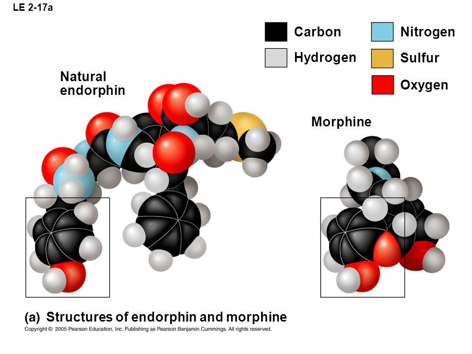 Structures of endorphin and morphine
