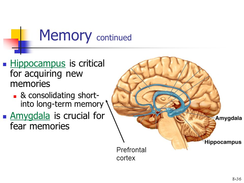 Learning Memory Ppt Video Online Download