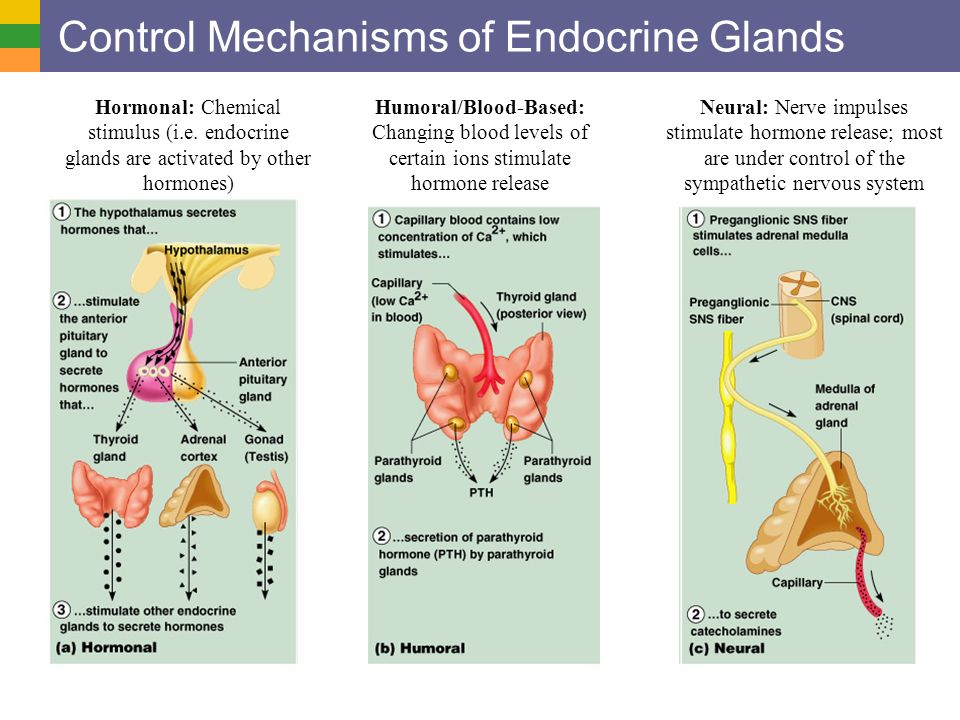 endocrine system chap 18 Z endocrine system abbreviations - chapter 18 tools copy this to my account help practice and master abbreviations associated with the endocrine system a b.