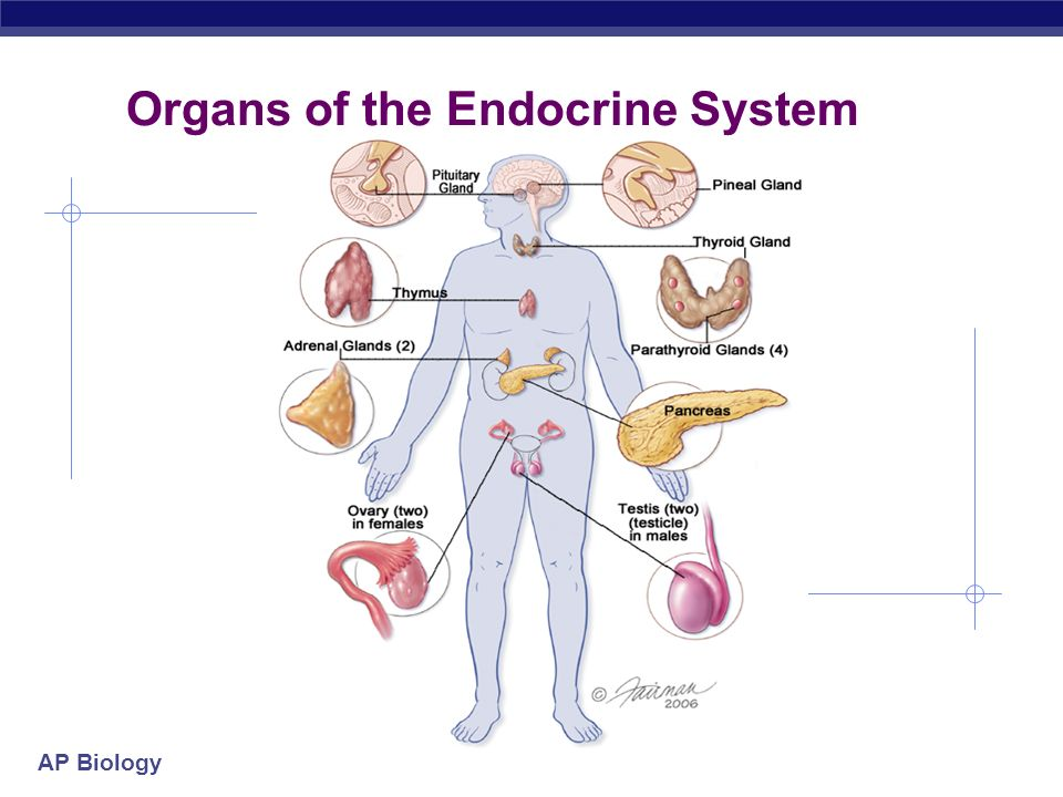 Images of Endocrine Organs - #SpaceHero
