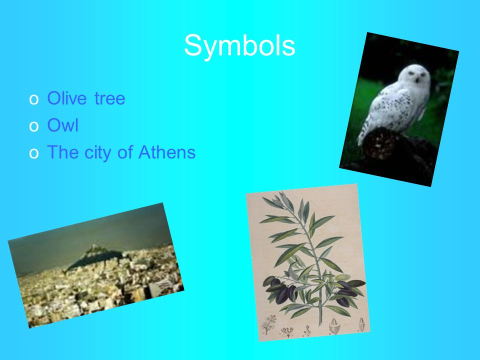 Symbols Olive tree Owl The city of Athens