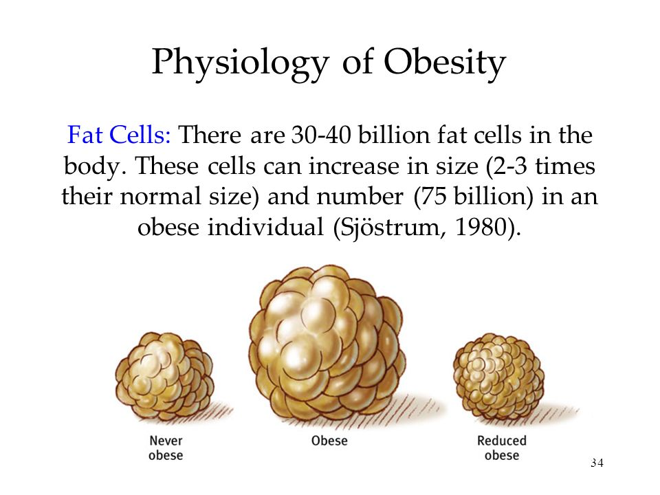 Physiology of Obesity