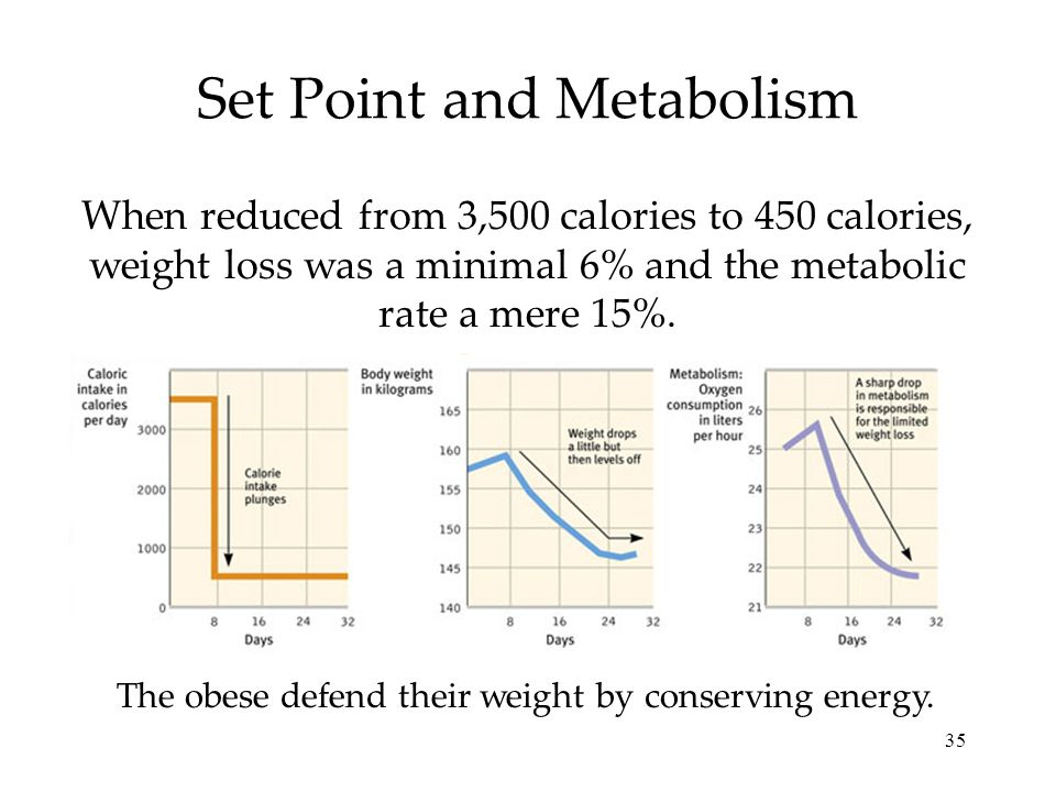 Set Point and Metabolism