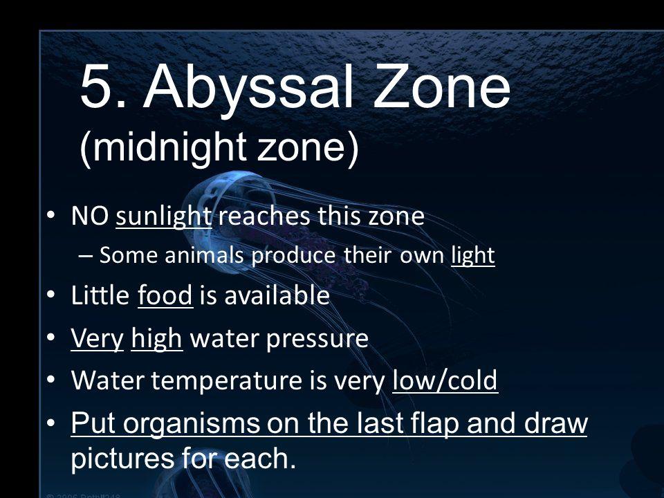 5. Abyssal Zone 5. Abyssal Zone (midnight zone)